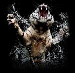 TigerJumping